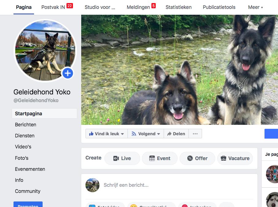 Geleidehond Yoko krijgt eigen Facebook en Instagram