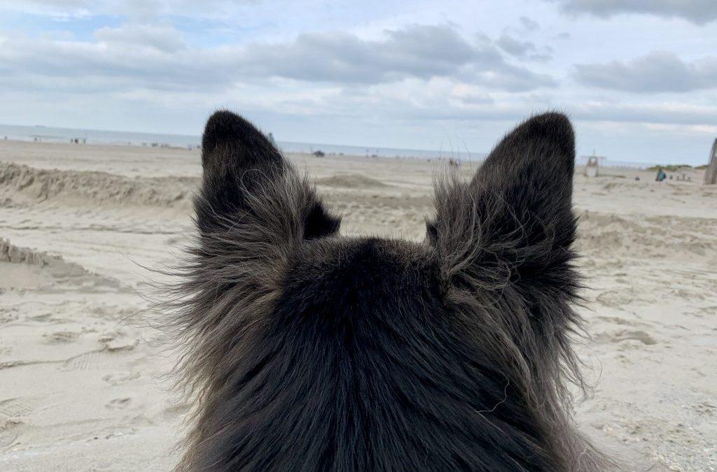 Yoko kijkt naar zee