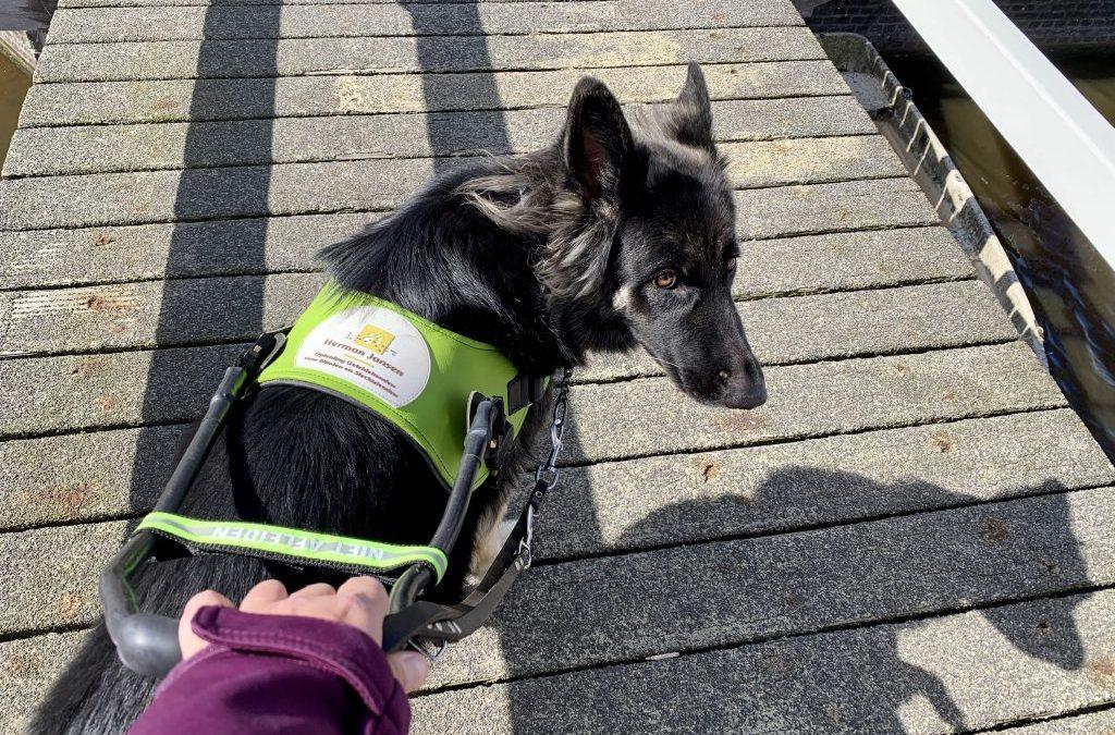 DRINGENDE OPROEP: Houd afstand van geleidehonden