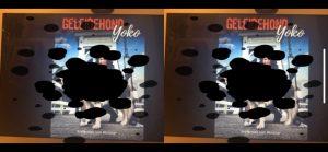 Cover Geleidehond Yoko gezien met gezichtsuitval